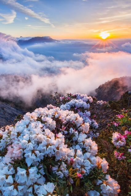 FlowersOnThePeakAtSunrise.jpg