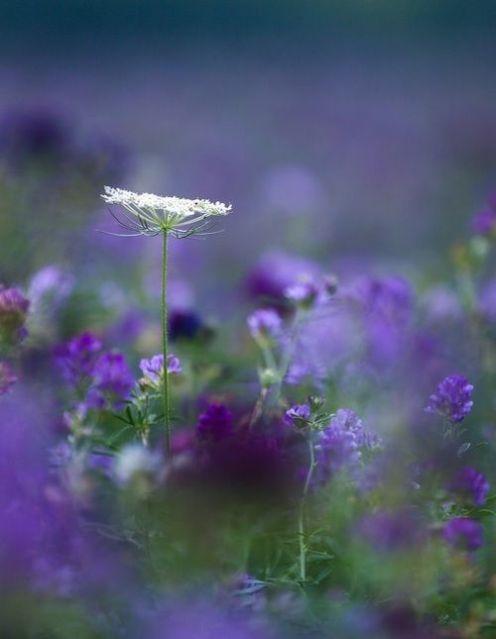 whiteflowerrising